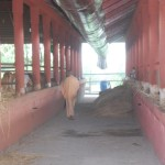 Radhanath Swami walking in the barn